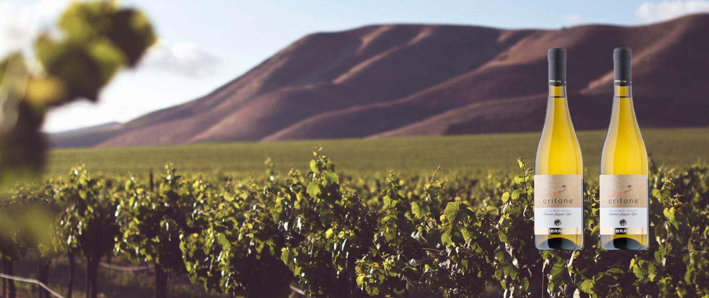 Vinoarte Wein des Monats Weinhandlung Bülach