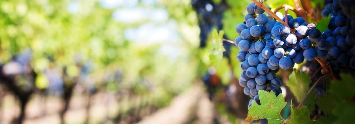 Jahresprogramm Vinoarte 2020